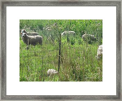 Framed Print featuring the photograph Looking My Way by Tina M Wenger