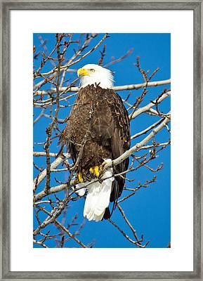 Looking On Framed Print by Debra  Miller