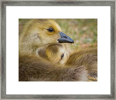 Looking Out For Sis Framed Print by Janis Knight