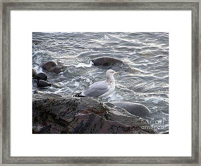 Framed Print featuring the photograph Looking Out To Sea by Eunice Miller