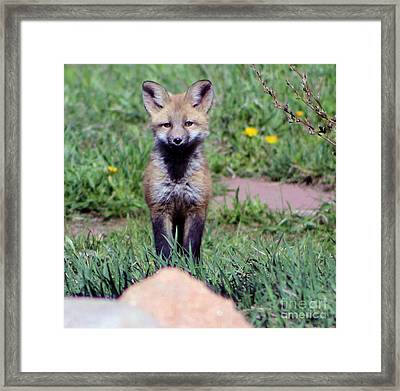 Take Me Home Framed Print by Fiona Kennard