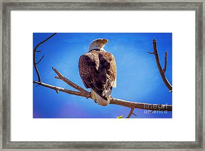 Looking Right Framed Print by Bob Hislop