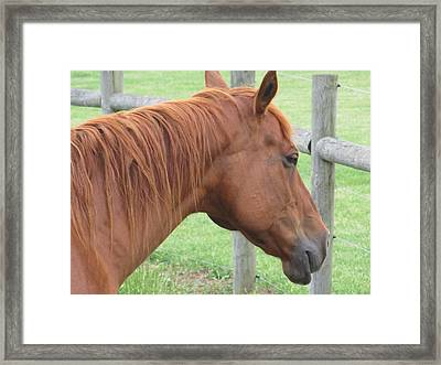 Looking Sideways Framed Print by Tina M Wenger