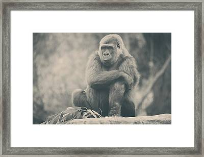 Looking So Sad Framed Print