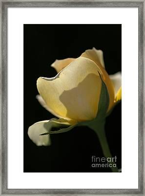 Looking Through Framed Print by Joy Watson