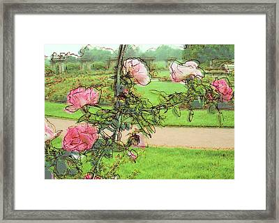 Looking Through The Rose Vine Framed Print
