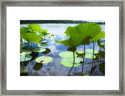 Looking Toward The Sun Framed Print