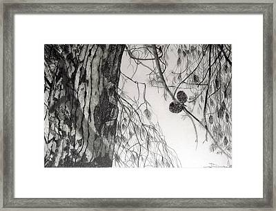 Looking Up 2 Framed Print