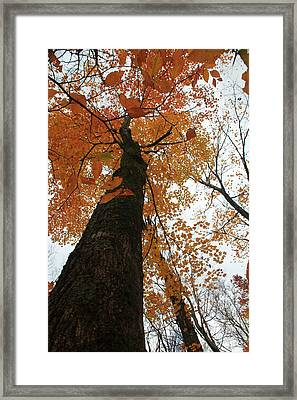 Framed Print featuring the photograph Looking Up by Alicia Knust