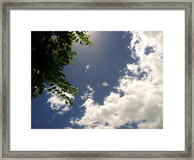 Framed Print featuring the photograph Looking Up by Alohi Fujimoto