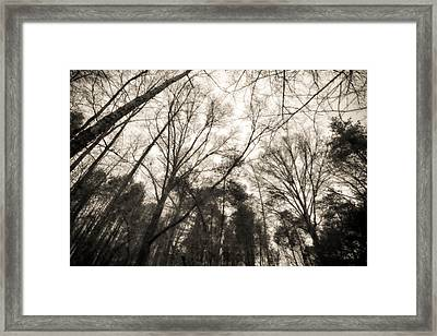 Looking Up At Trees Framed Print