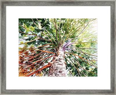 Looking Up Framed Print by Bobbi Price