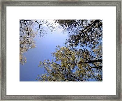Framed Print featuring the digital art Looking Up By Angela Clay by Angelia Hodges Clay