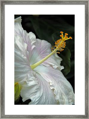 Looking Up Framed Print by Cindy Manero