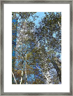 Looking Up From Bryant Park In Autumn Framed Print by Sarah Loft