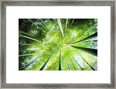 Looking Up In The Bamboo Grove Framed Print by Marser