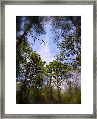 Framed Print featuring the photograph Looking Up by Jim Whalen
