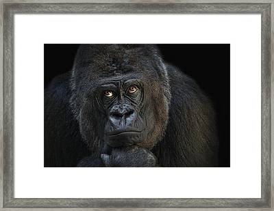 Looking Up Framed Print by Joachim G Pinkawa
