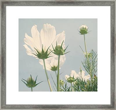Looking Up Framed Print by Kim Hojnacki