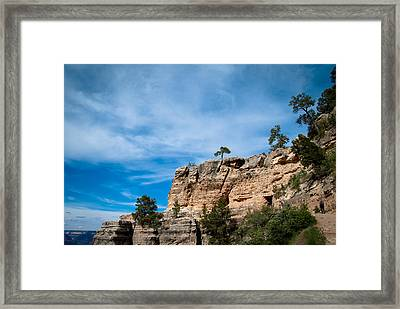 Looking Up Framed Print by Nickaleen Neff