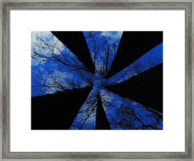 Looking Up Framed Print by Raymond Salani III