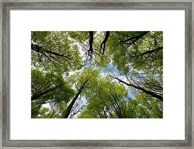 Framed Print featuring the digital art Looking Up by Ron Harpham