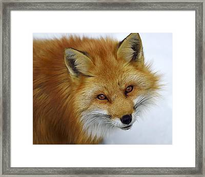 Looking Up Framed Print by Tony Beck