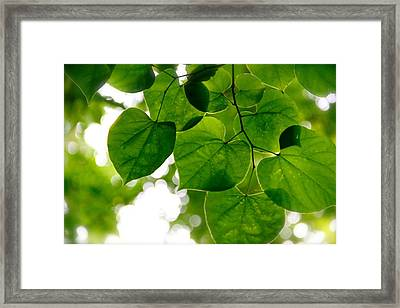 Looking Up Framed Print by Tracy Male
