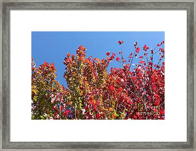 Framed Print featuring the photograph Looking Upward by Debbie Hart