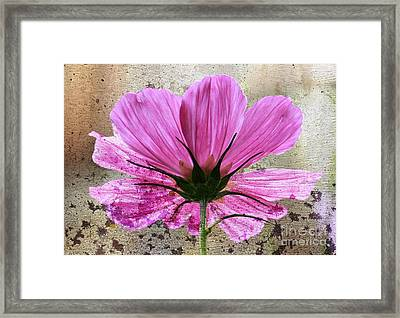 Looking Upwards Framed Print