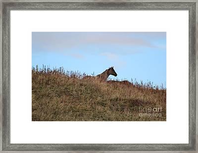 Lookout Framed Print by Brenda Henley