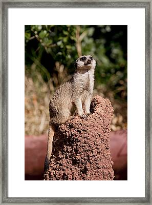 Lookout Post Framed Print by Michelle Wrighton