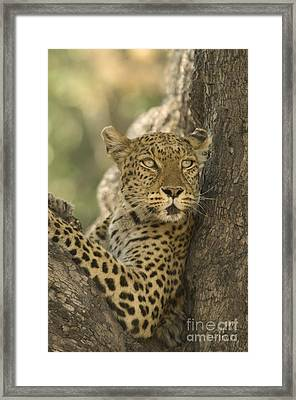 Lookout Framed Print by Wayne Bennett