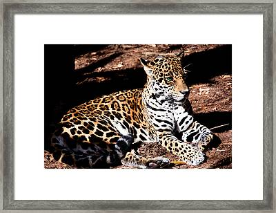 Looks Are Deceiving Framed Print