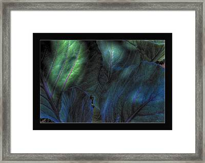 Looming Cabbage Framed Print by Zorn Matson