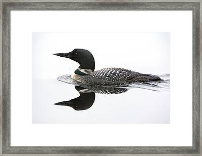 Loon #2 Framed Print by Wade Aiken