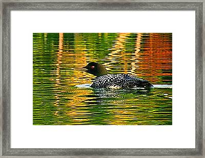 Loon 3 Framed Print by Pat Now