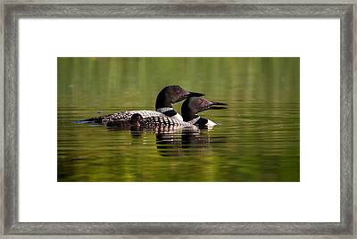Loon Family Framed Print