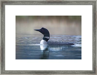 Framed Print featuring the photograph Loon by Jack Bell