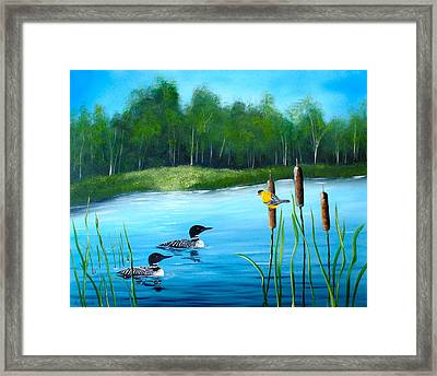Loons In A Lake Framed Print by Kevin  Brown