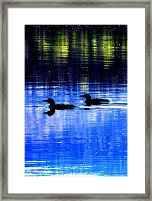 Loons In Pittsburg Framed Print by Will Boutin Photos