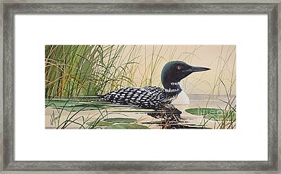 Loon's Tranquil Shore Framed Print