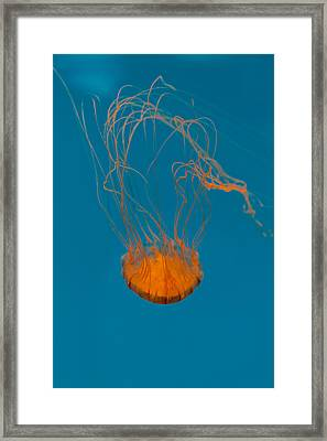 Loop To Loop Orange Nettle Framed Print by Scott Campbell