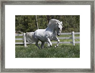 Loose In The Paddock Framed Print by Wes and Dotty Weber
