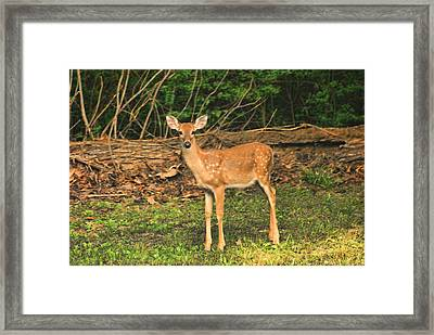 Loosing Spots Framed Print by Rick Friedle