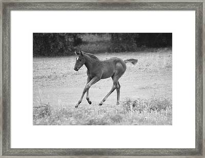 Loping Fun Framed Print by Melissa Ahlers