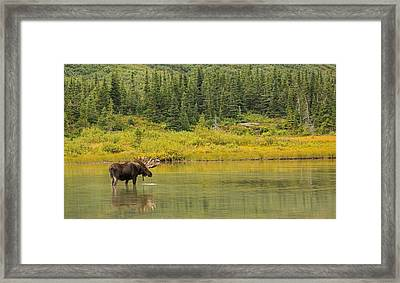 Lord Of The Lake Framed Print by Sandy Sisti