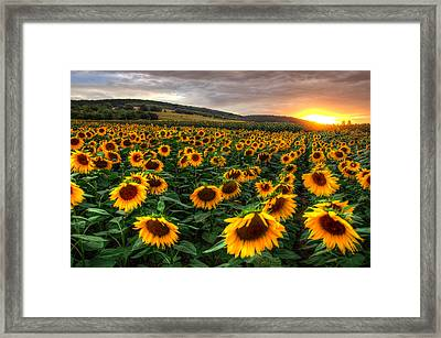 Lord Of The Sun Framed Print