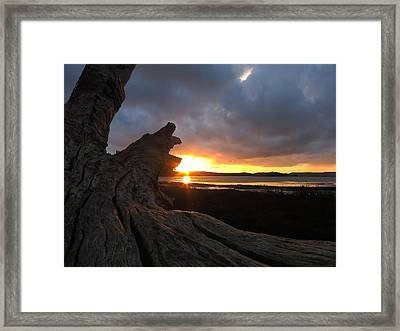 Los Osos Driftwood Framed Print