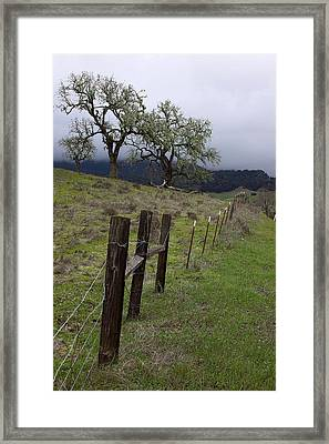 Los Padres National Forest Framed Print